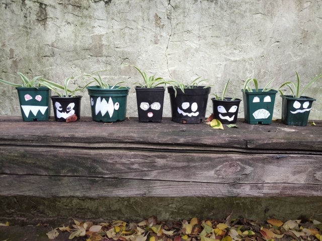a row of spider plants in pots with spooky faces