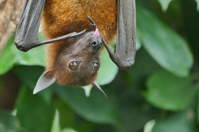 cute bat hanging upside down from tree