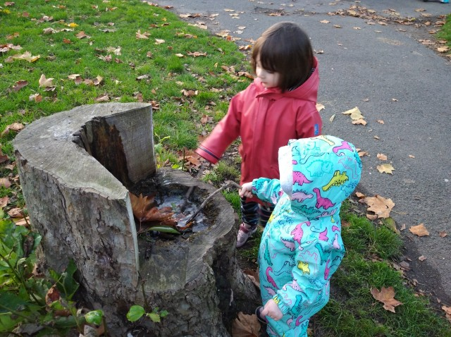 two children poke leaves with a stick in a tree trunk