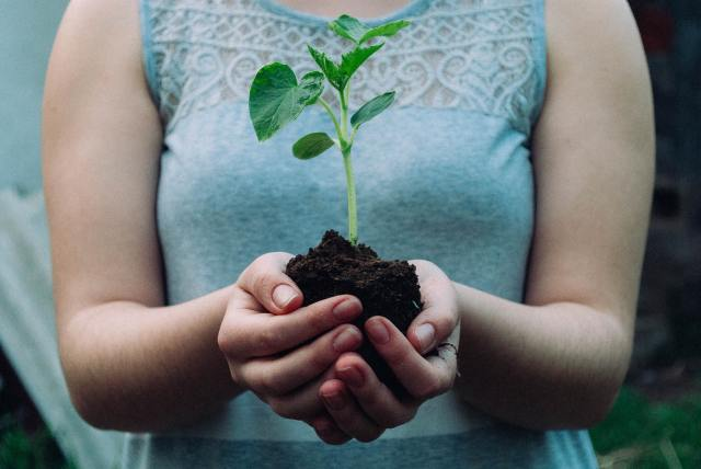 close up of hands holding seedling in soil