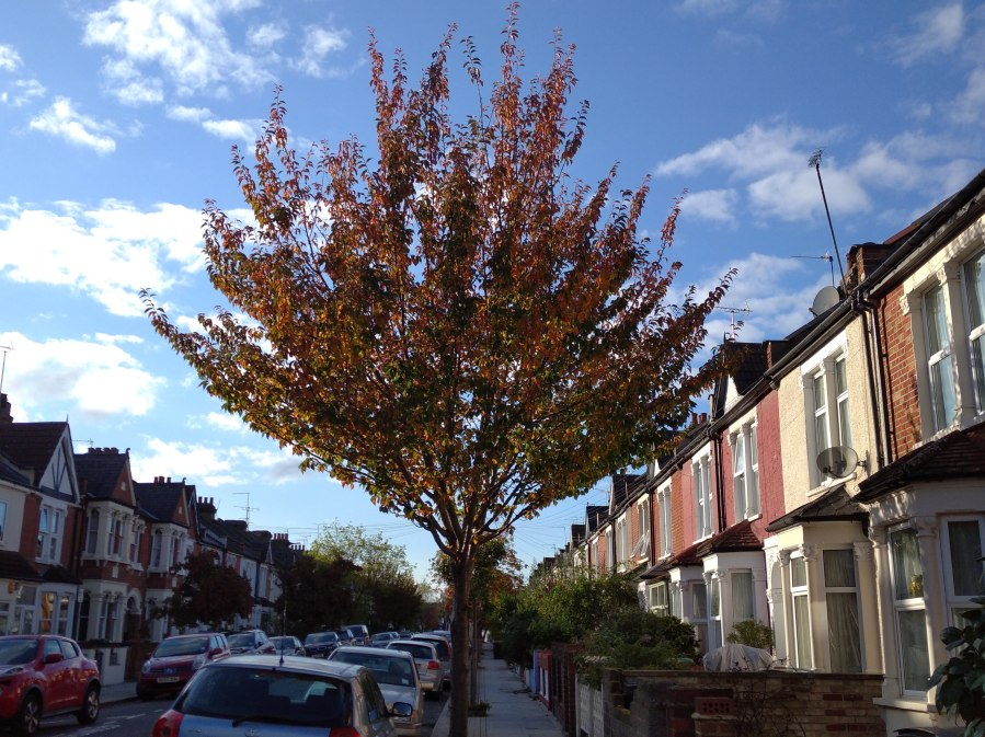 street tree in autumn under blue sky