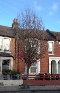 hawthorn tree in winter on street