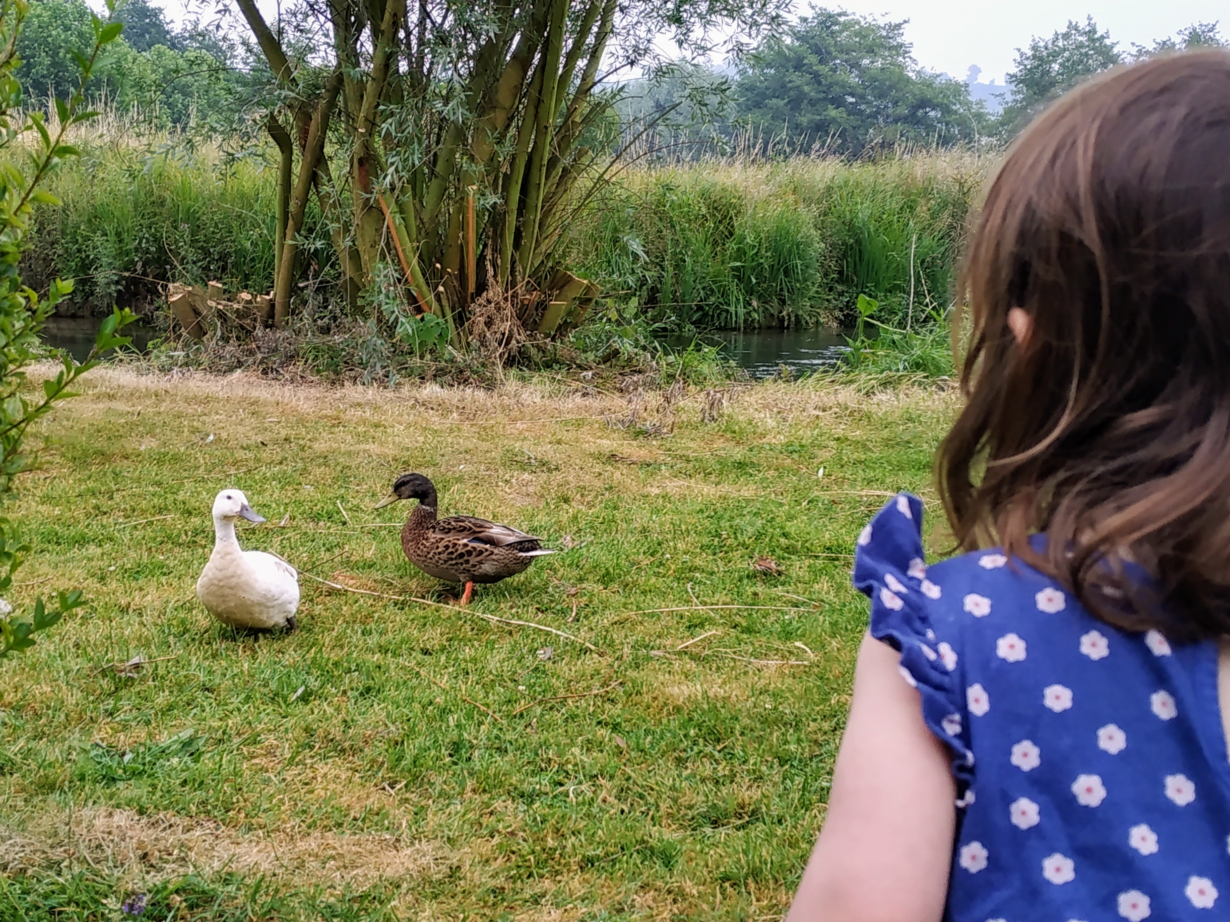 girl watching ducks by a stream