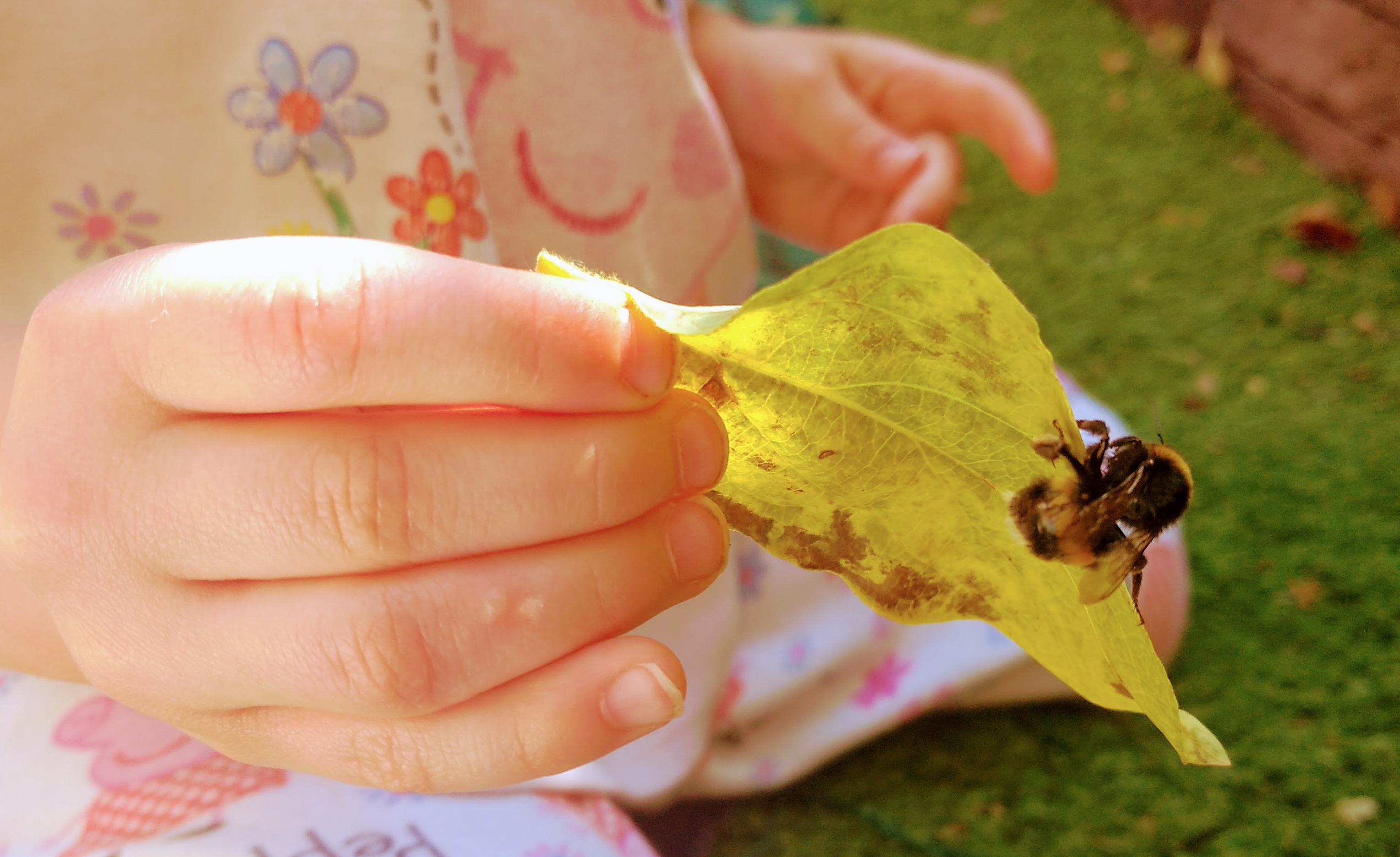 child's hand holding leaf with bee on it