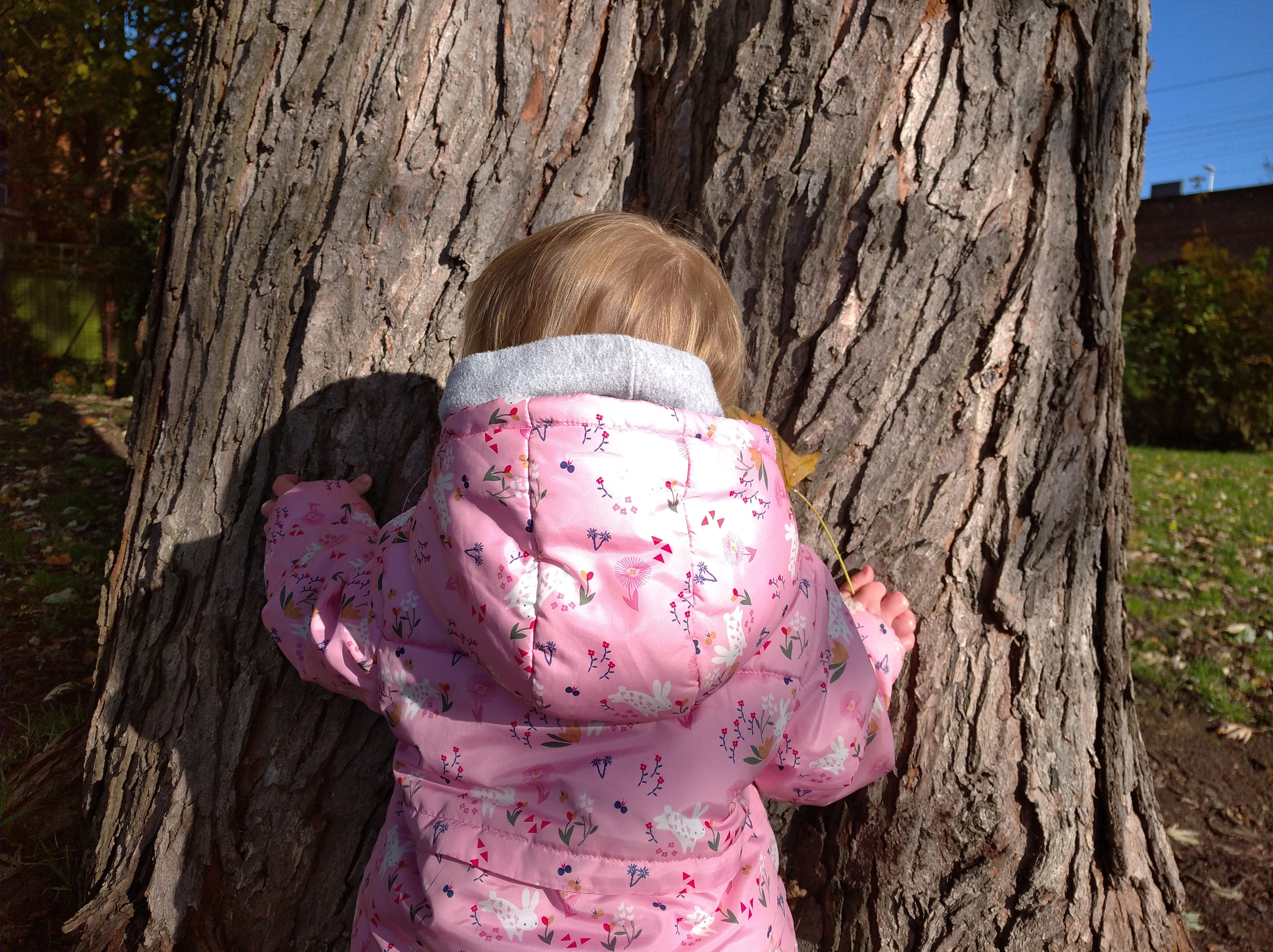 toddler hugging a tree
