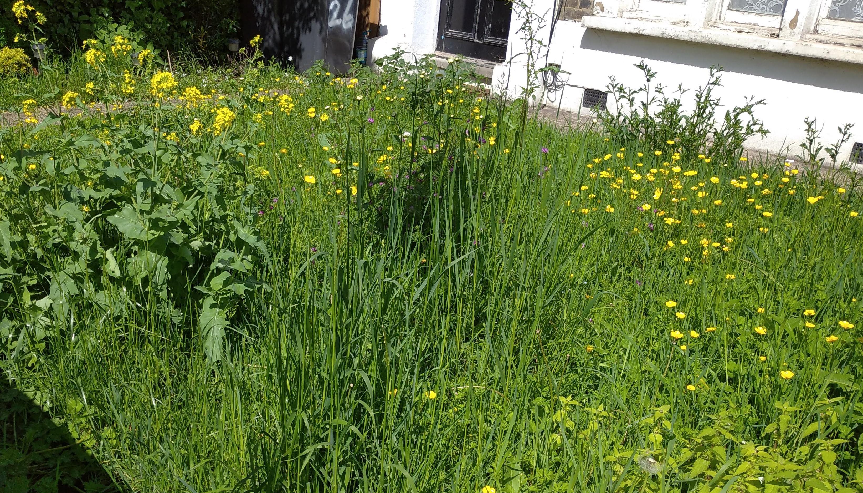 wildflower front lawn