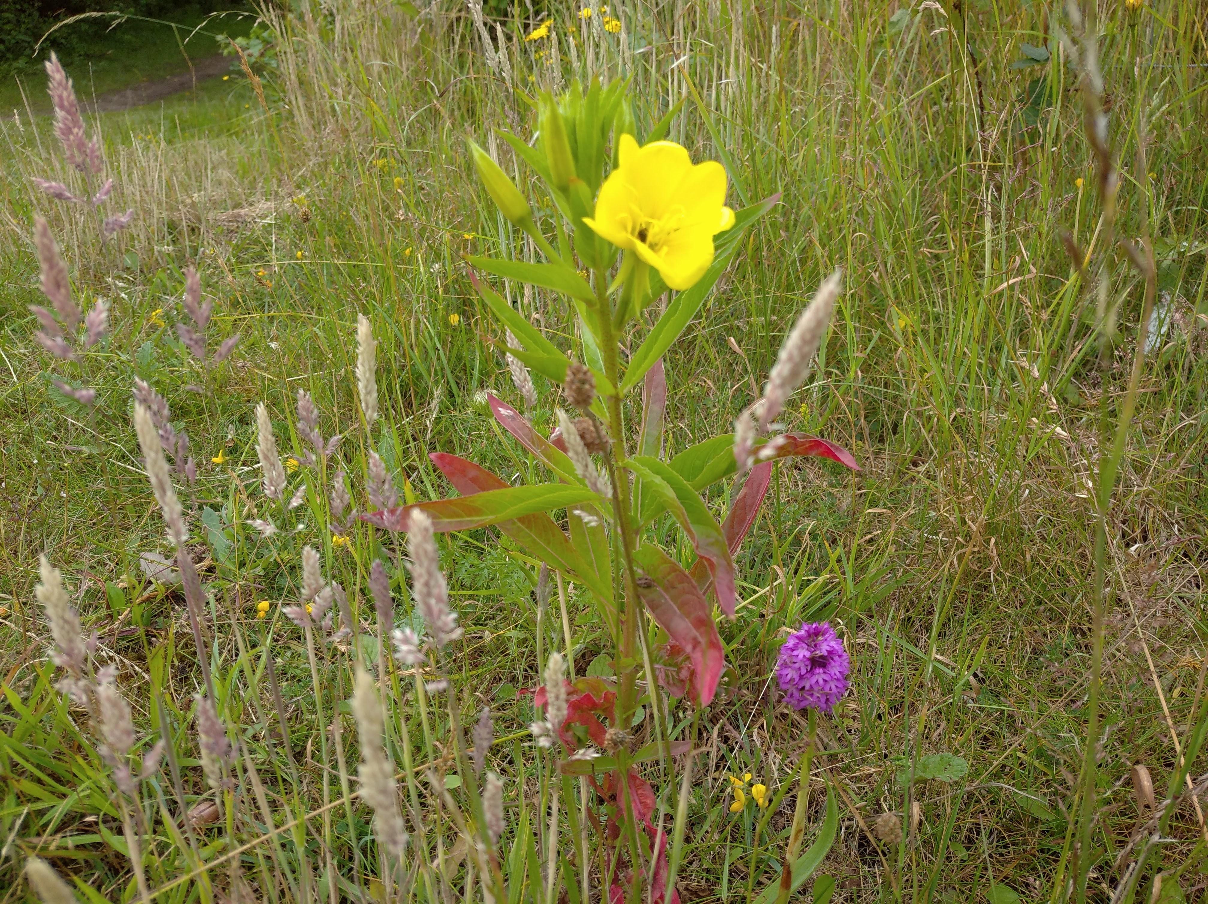 wildflowers near coast